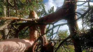 Bigfoot developing new territory with Humans help if we stay back now.