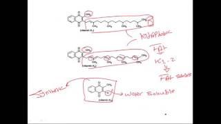 biochemistry vitamin K فيتامين بايوكيمستري