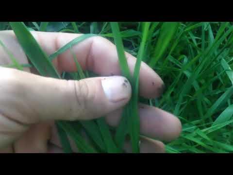 Сидераты что посеять под зиму / Сидераты в август что посадить