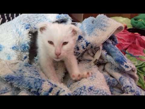 Воронеж котята в хорошие руки