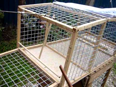 how to build a minor bird trap