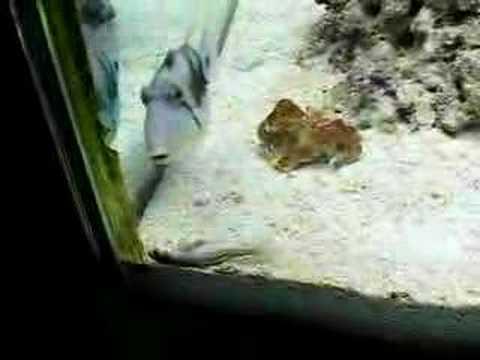 beautiful fishes in sea. eautiful fish in the sea!