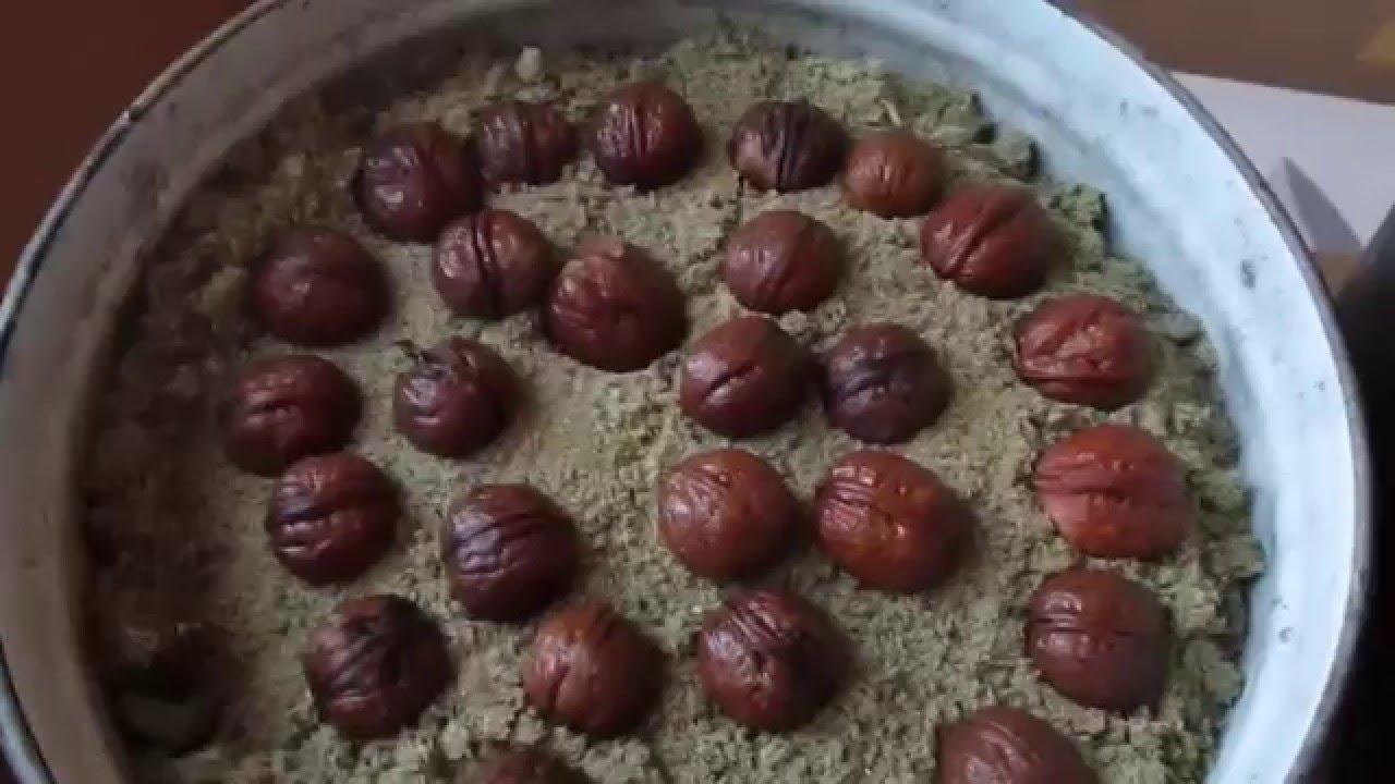 Выращивание грецкого ореха из семян быстрым методом часть 1 658