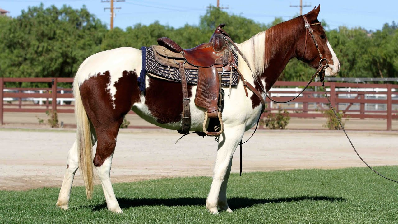 SPRING CHLOE MAY 16 2012 AMERICAN PAINT HORSE ASSOCIATION - YouTube