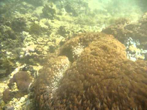 Sri Lanka,ශ්රී ලංකා,Ceylon,Coral Reef (16)