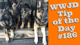 What Would Jeff Do? Dog Training Tip of the Day #186  dog training shortcuts