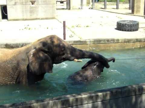 ゾウの水浴び20100818 222