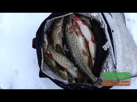 сроки запрета на рыбалку в 2017 году в алматинской области