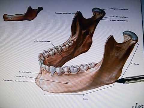 Mandíbula - Acidentes ósseos