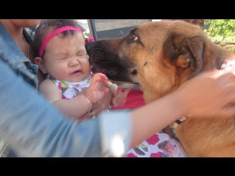 BABY LOVES DOGS! - July 13, 2013 - itsJudysLife Vlog