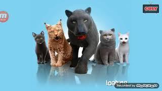Nuôi thú mèo con siêu quậy Cat simulator cu lỳ chơi game
