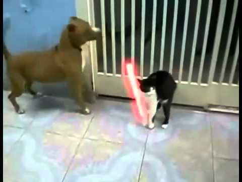 Cat Vs Dog Gif