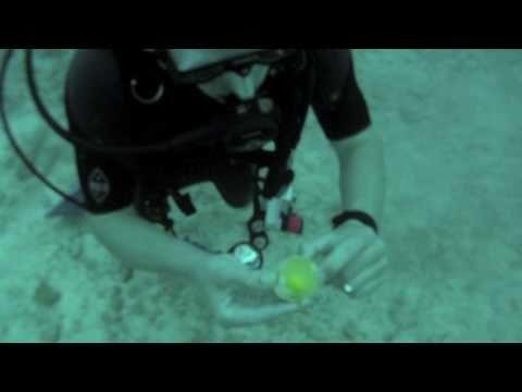 Cracking an Egg Underwater