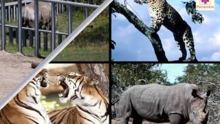 Animals and Human Beings - Similarities and Differences | Periwinkle