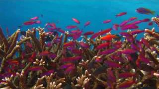 подводный мир ....