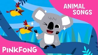 Koala Lalala | Koala | Animal Songs | Pinkfong Songs for Children
