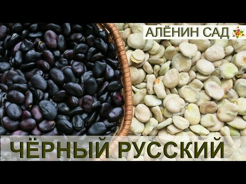 Бобы – выращивание и рецепты приготовления блюд из бобов