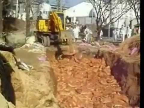 Chickens Buried Alive - South Korea Culling (2007)