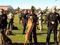 Stryker Memorial K-9 Dogs & Handlers
