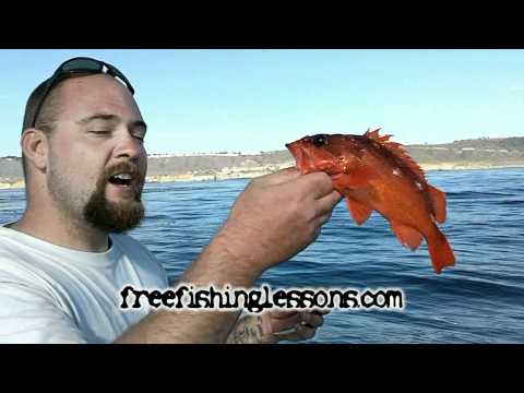 Fishing San Diego Kelp