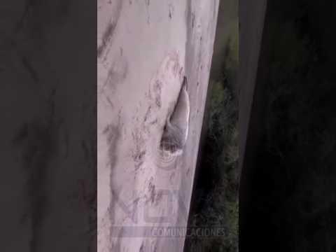 Apareció otro lobo marino en Gualeguaychú