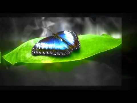 Arnob Jhal Muri - Projapoti Abida Sultana - Projapotita Jokhon Tokhon Ure Ure - She is my ButterFly