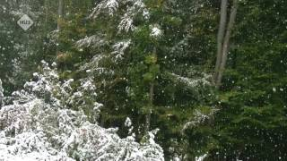 1 hour of relaxing snowfall / sneeuwval / winter / slow tv / wetterburg germany
