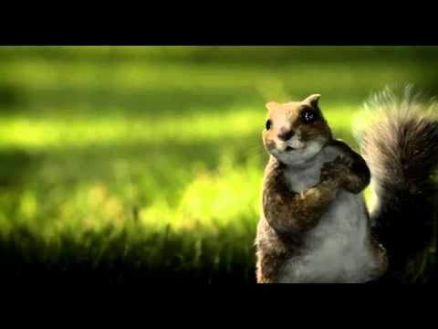 Kit Kat Dancing Squirrels video