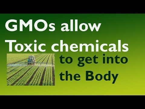 GMO Effects, Does Genetic Modification Concern You?