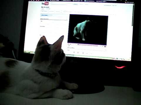 Pika watching herself on youtube!