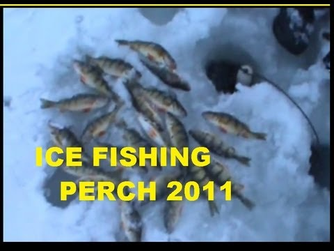 Freshwater Fishing Report March12012worldnews