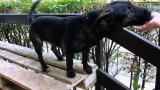 Kutya öröm