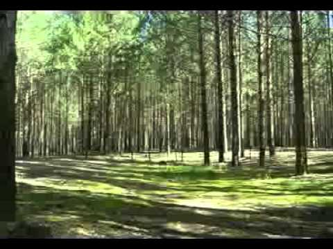 Forest Fantasy - Natural sounds (no Music)