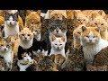 Самые угарные РЕМИКСЫ с животными The Most Funny REMIX Of Animals mp3