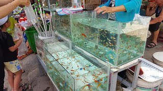 Interesting facts about market selling cheap and beautiful ornamental fishes