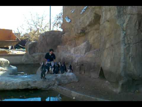 Penguin Feeding at the Denver Zoo