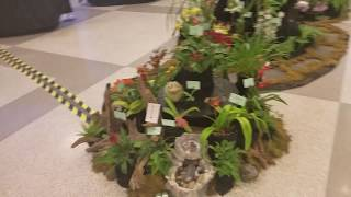 Greater Cleveland orchid society show and sale 2019 #gcos2019