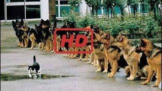 Best of Funny German Shepherd Video - 2017