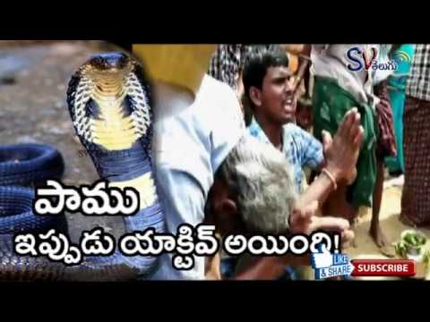 Mysterious Snake In East Godavari | Villagers Worship Snake In East Godavari Village | SV TELUGU TV