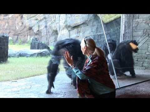 Jane Goodall visits the Houston Zoo's chimpanzees