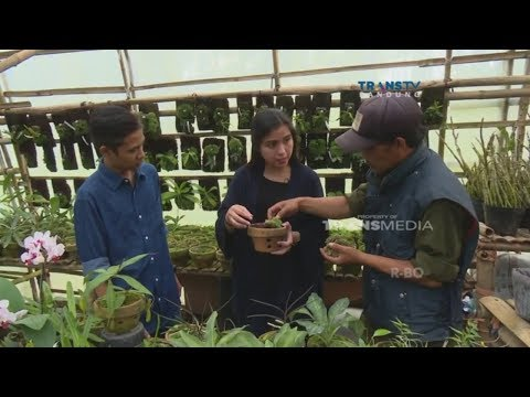 Youtube wisata bandung orchid