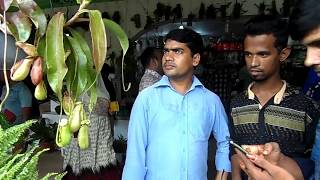 Dangerous carnivorous plants  ভয়ংকর মাংসাশী উদ্ভিদ এখন বাংলাদেশে