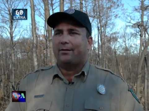 Bastrop State Park Emerging From Rehab - Worldnews.