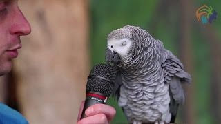 Einstein the parrot wows the internet with her spot-on impressions