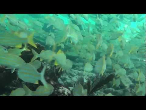 Snorkeling in Alligator Reef