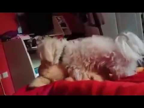 Sleep Sex video