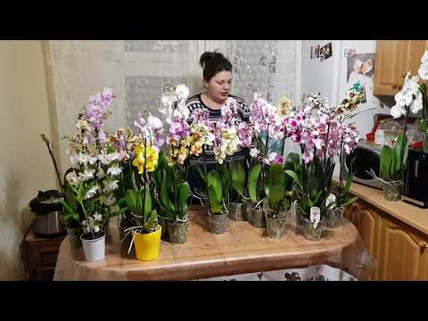 Выращивание орхидей на даче 759