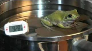 Boiling Frog Experiment