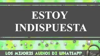 Estoy Indispuesta - Conversaciones De Whatsapp - Los Mejores Audios Y Videos Whatsapp