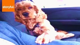 Puppy Needs Paw Held While Driving